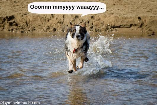 dog_trick_come